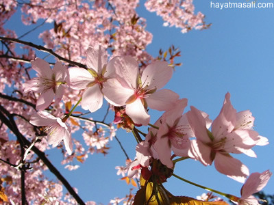 bahar mevsimi