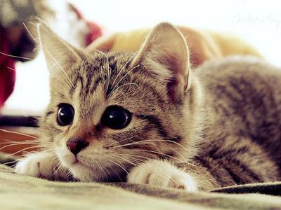 Kedi Kendi Yavrusunu Yer mi?