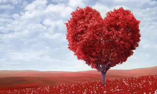 Sevmenin Verdiği Sarhoşluk