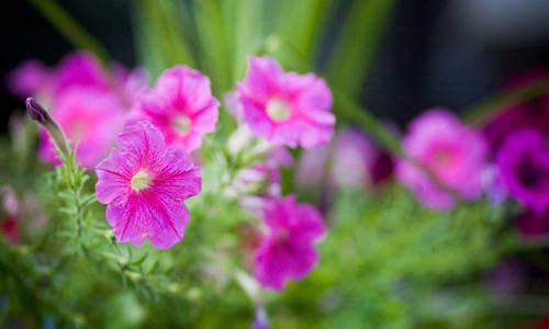Mayıs Çiçekleri