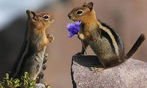 Doğal Değildir Aşık Olmak