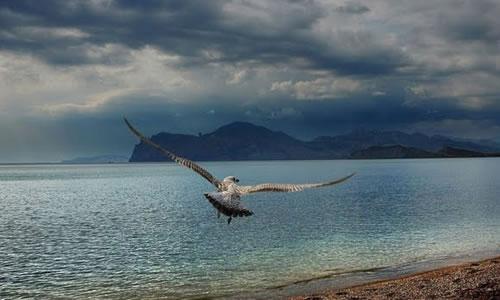 marti deniz
